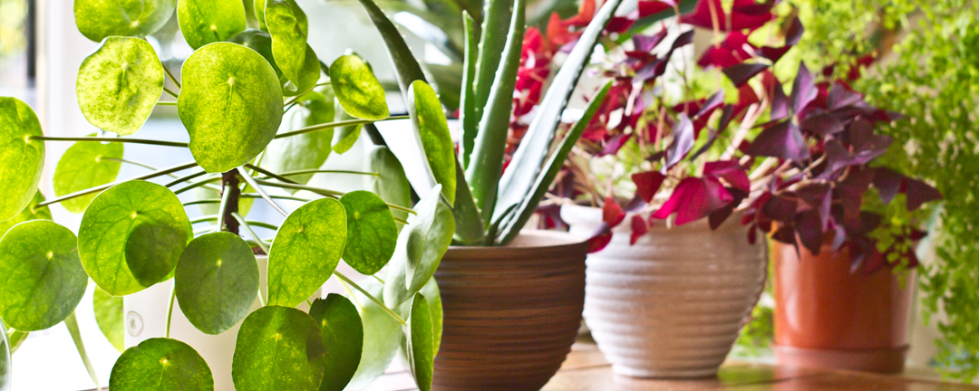 Choosing the Right Houseplants for Your Home
